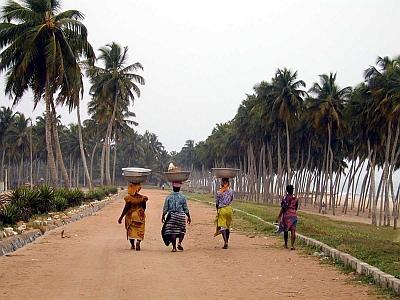 Klimawandel: Ghana als Wachstumsmarkt